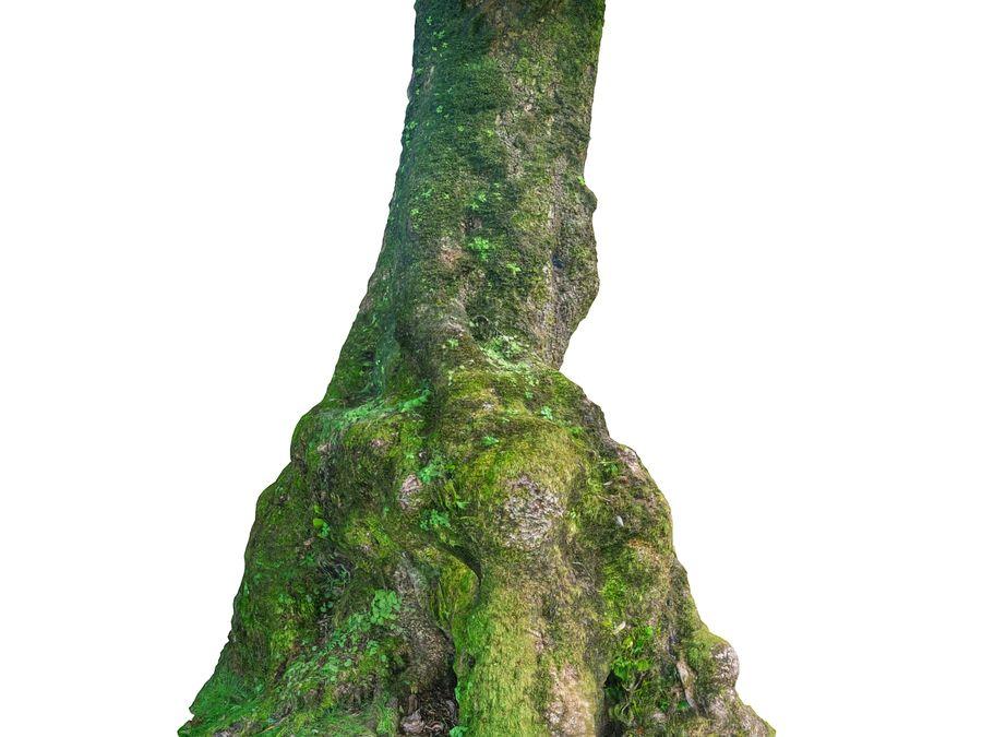 Albero della foresta di alloro 16K royalty-free 3d model - Preview no. 6