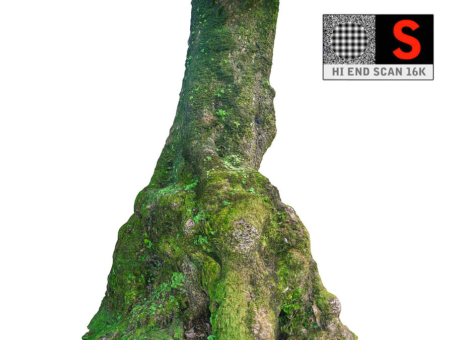 Albero della foresta di alloro 16K royalty-free 3d model - Preview no. 1