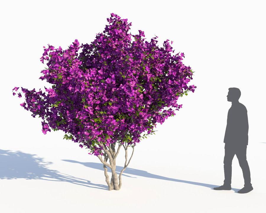Семь Бугенвиллий (+ GrowFX) royalty-free 3d model - Preview no. 7