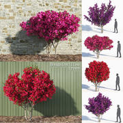 Seven Bougainvillea Trees (+GrowFX) 3d model