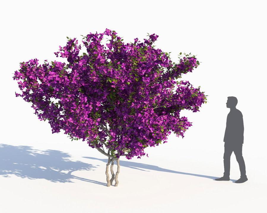 Семь Бугенвиллий royalty-free 3d model - Preview no. 9