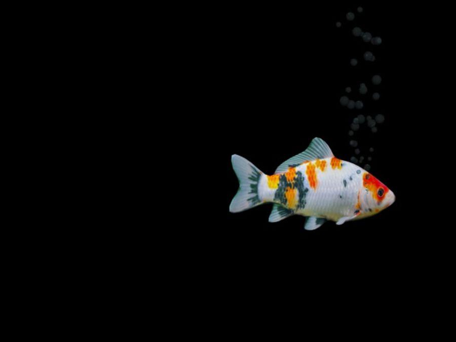 水族館の魚のアニメ royalty-free 3d model - Preview no. 4