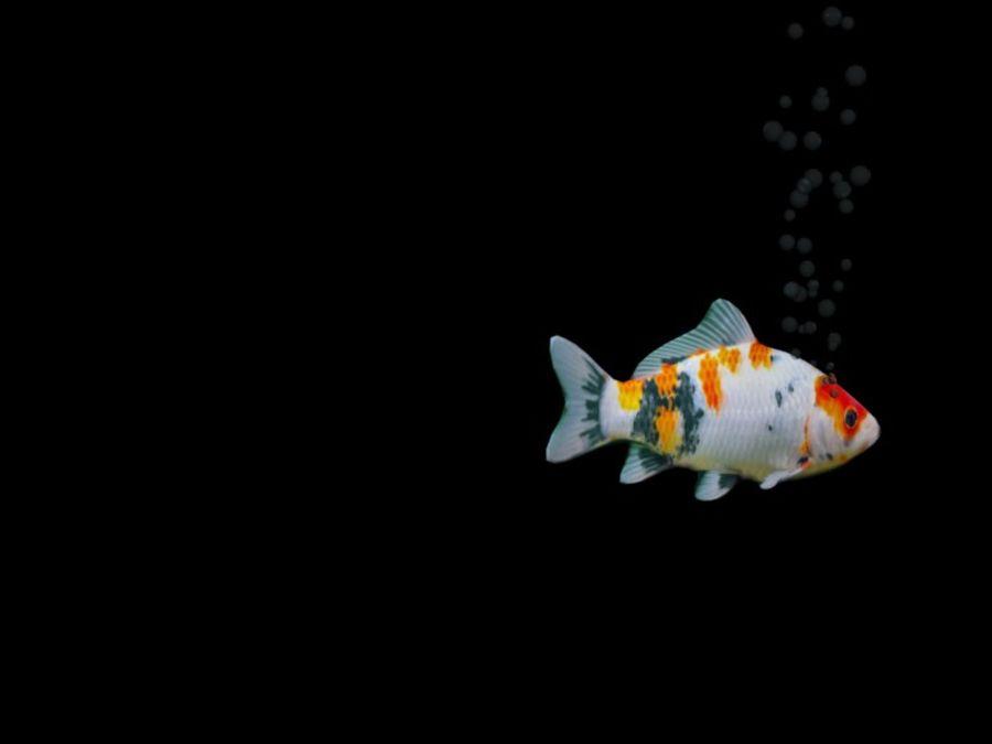 水族館の魚のアニメ royalty-free 3d model - Preview no. 5