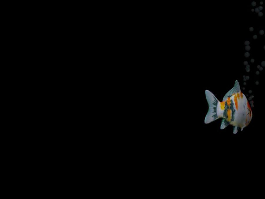 水族館の魚のアニメ royalty-free 3d model - Preview no. 8