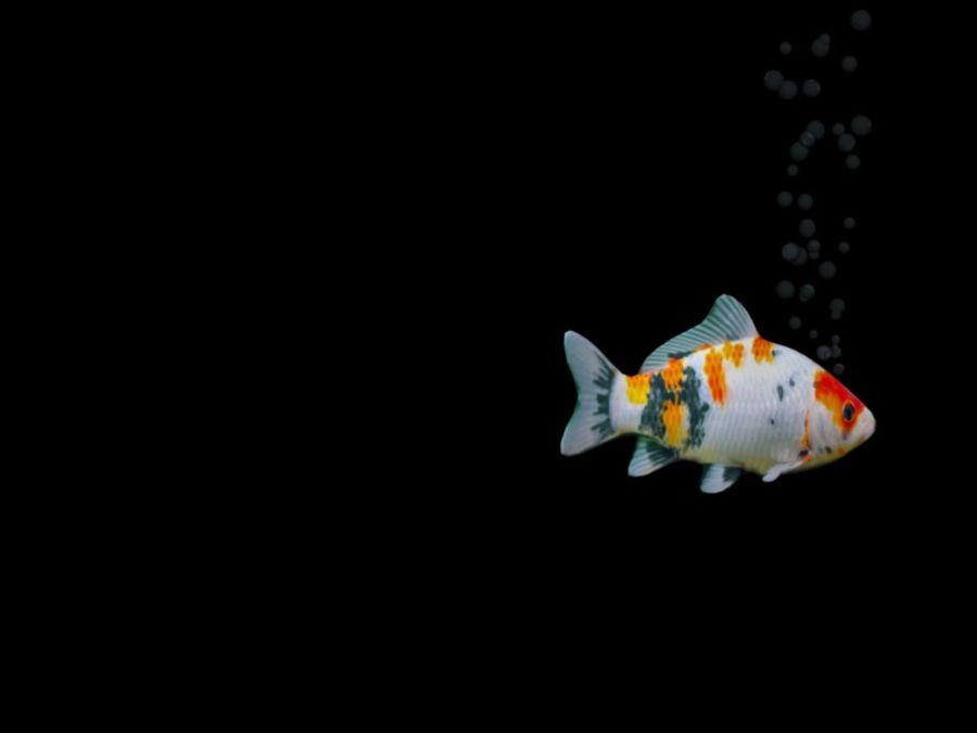 水族館の魚のアニメ royalty-free 3d model - Preview no. 6