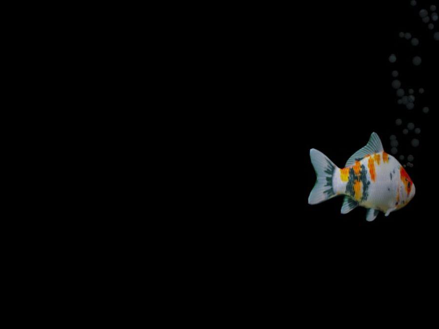 水族館の魚のアニメ royalty-free 3d model - Preview no. 7