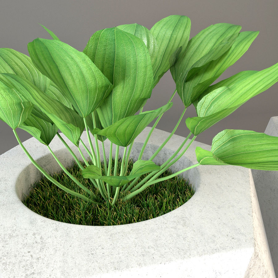 Plante royalty-free 3d model - Preview no. 3