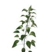 stinging nettle 3d model