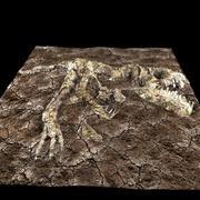 T-Rex fossilized 3d model