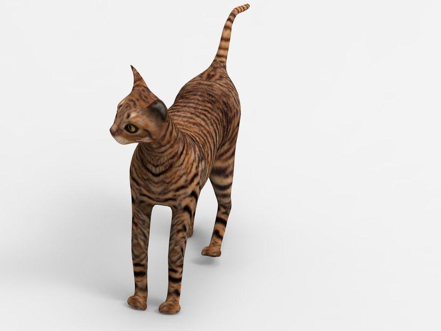 kot takielunek royalty-free 3d model - Preview no. 7