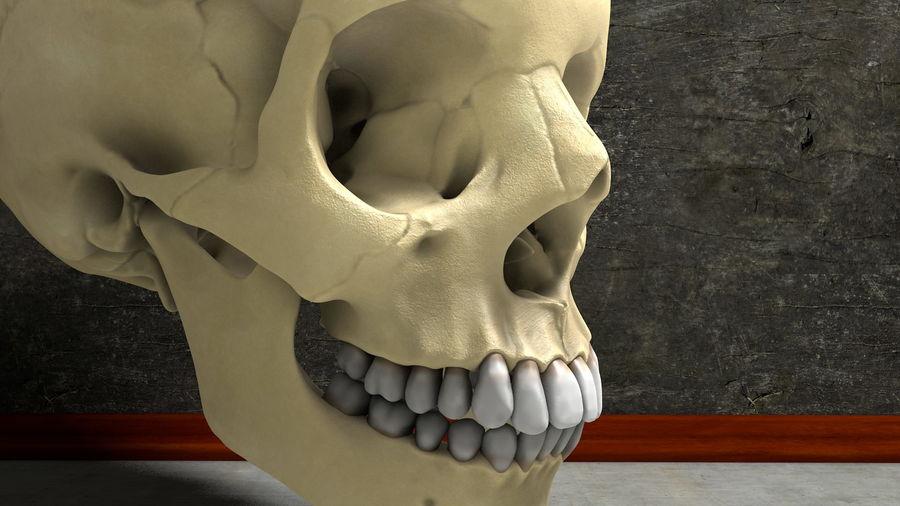 Os de crâne humain Anatomie simple royalty-free 3d model - Preview no. 1
