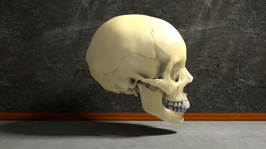 Os de crâne humain Anatomie simple royalty-free 3d model - Preview no. 2