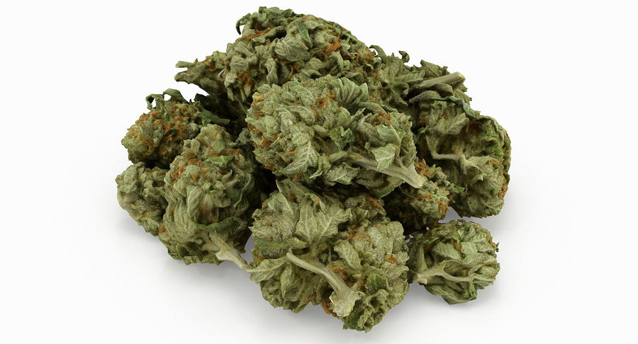 Cannabis 05 royalty-free 3d model - Preview no. 7
