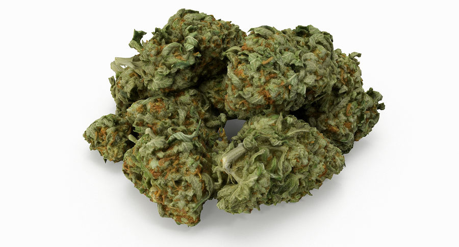 Cannabis 05 royalty-free 3d model - Preview no. 3