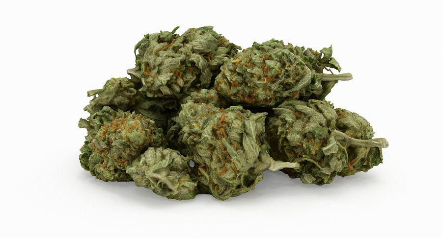 Cannabis 05 royalty-free 3d model - Preview no. 4