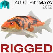 Koi Fish Rigged for Maya 3d model