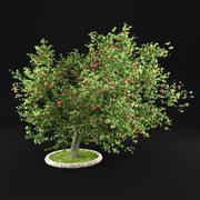 Яблоня 3d model