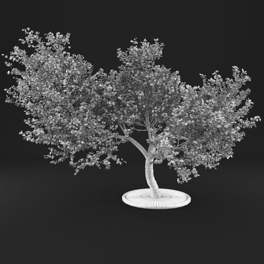 Apple Tree 1 royalty-free 3d model - Preview no. 11