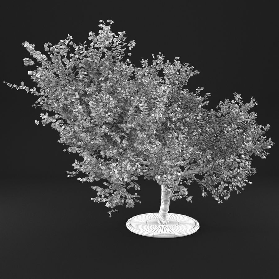 Apple Tree 1 royalty-free 3d model - Preview no. 12