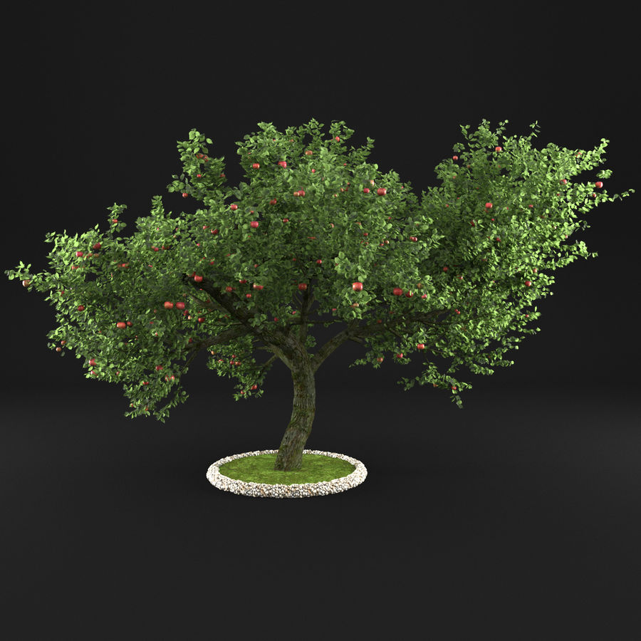 Apple Tree 1 royalty-free 3d model - Preview no. 8