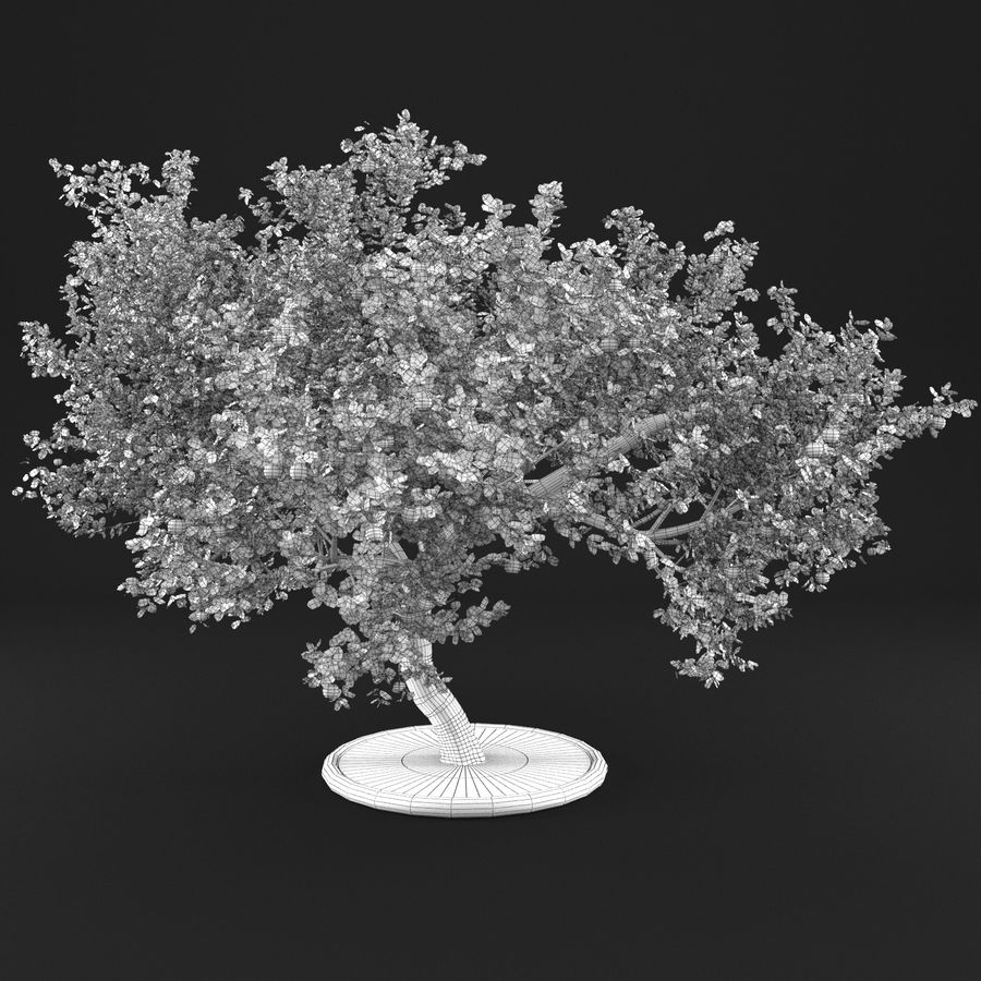 Apple Tree 1 royalty-free 3d model - Preview no. 10