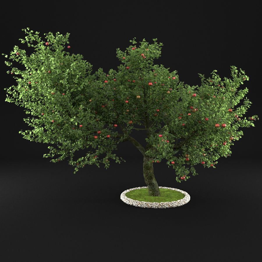 Apple Tree 1 royalty-free 3d model - Preview no. 3
