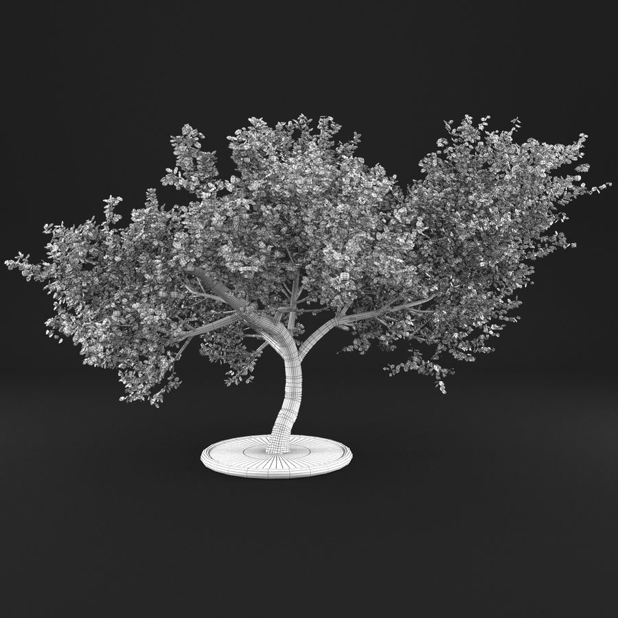 Apple Tree 1 royalty-free 3d model - Preview no. 15