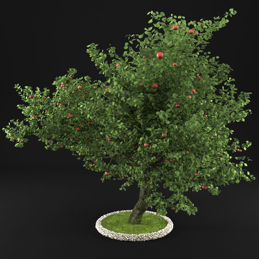 Apple Tree 1 royalty-free 3d model - Preview no. 5