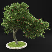 Apple Tree 3 3d model