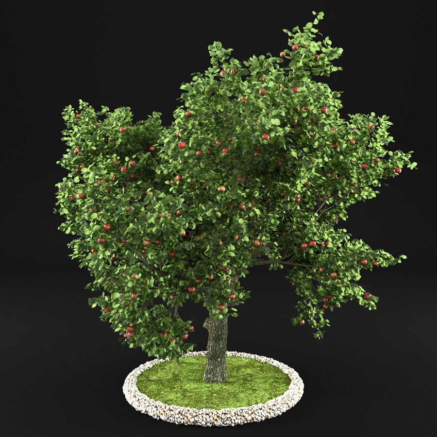 Яблоня 4 royalty-free 3d model - Preview no. 2