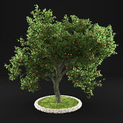 Apple Tree 4 3d model