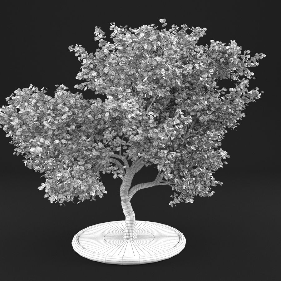 Elma Ağacı 5 royalty-free 3d model - Preview no. 14
