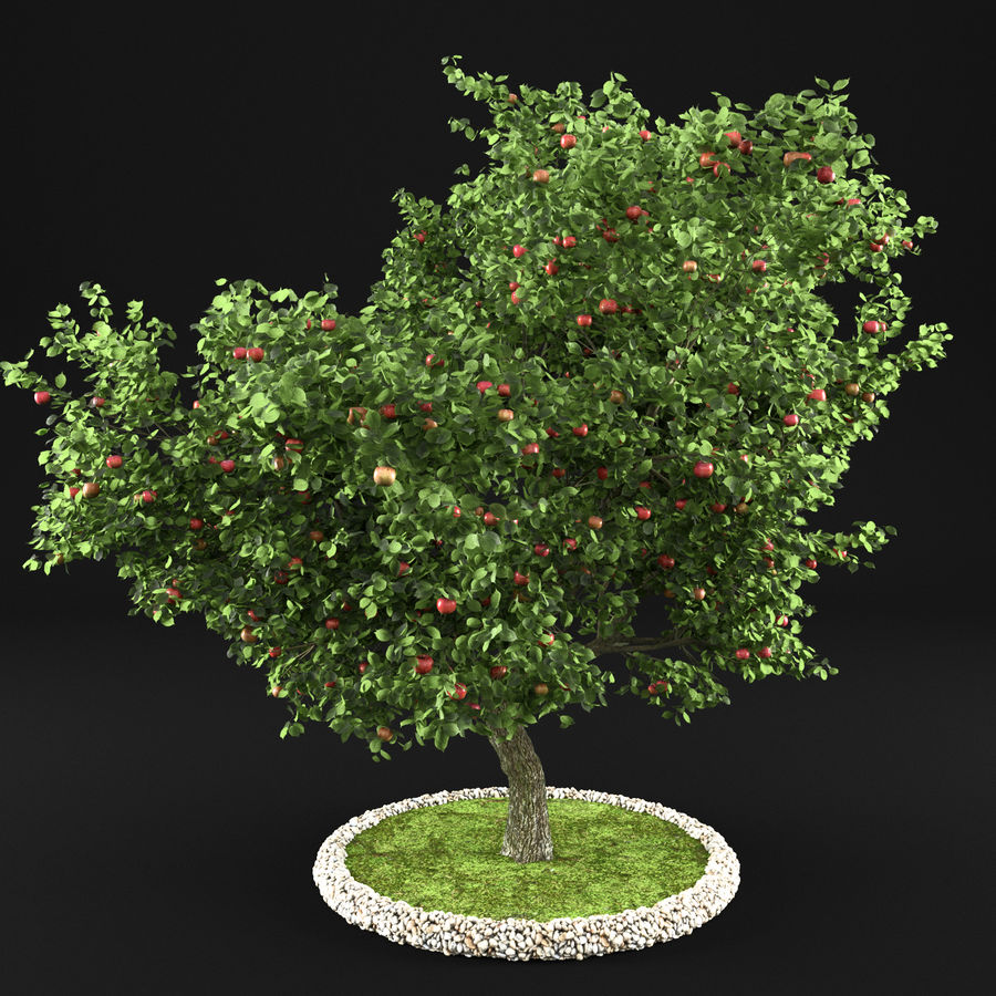 Elma Ağacı 5 royalty-free 3d model - Preview no. 5