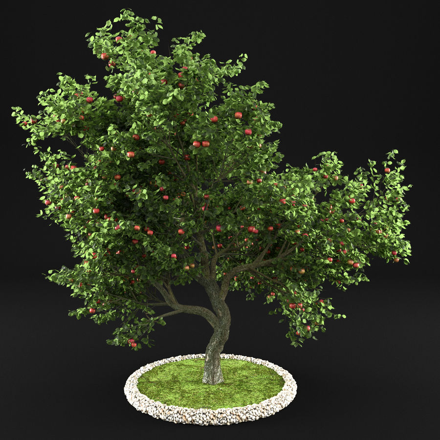 Elma Ağacı 5 royalty-free 3d model - Preview no. 1