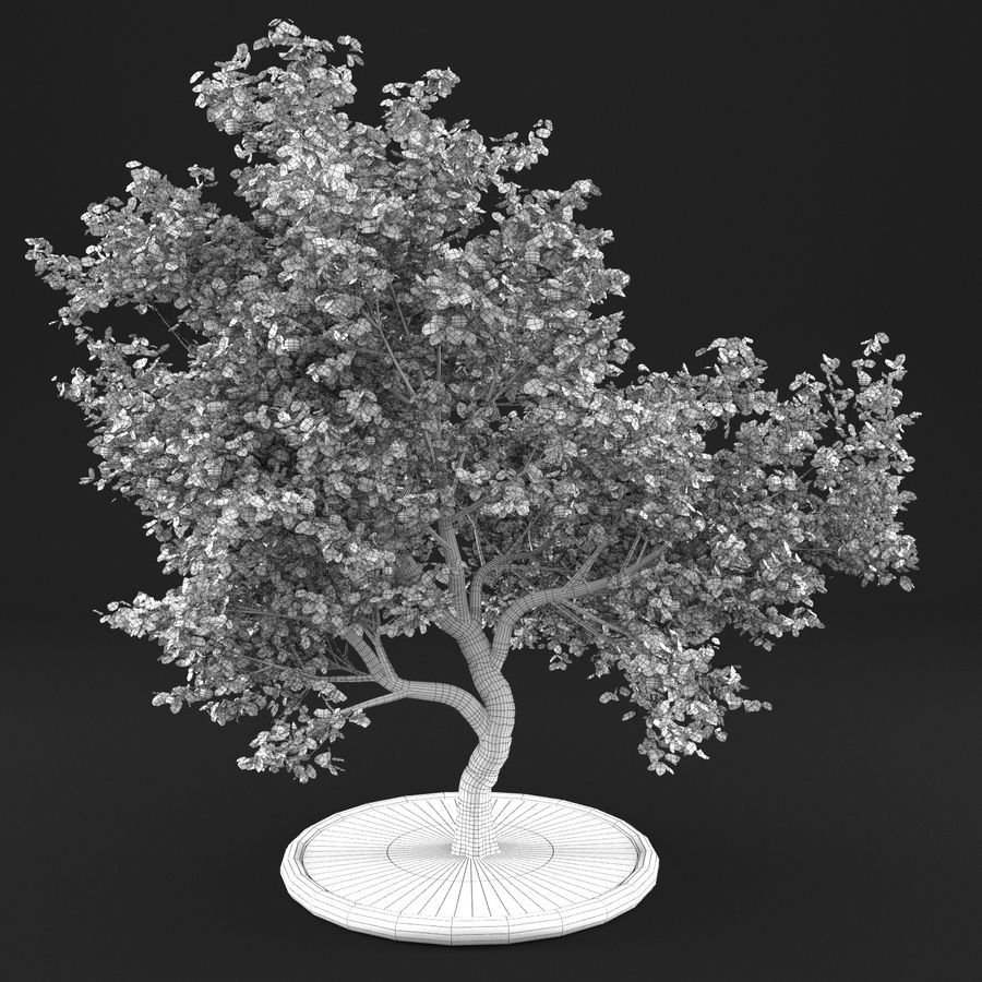 Elma Ağacı 5 royalty-free 3d model - Preview no. 9