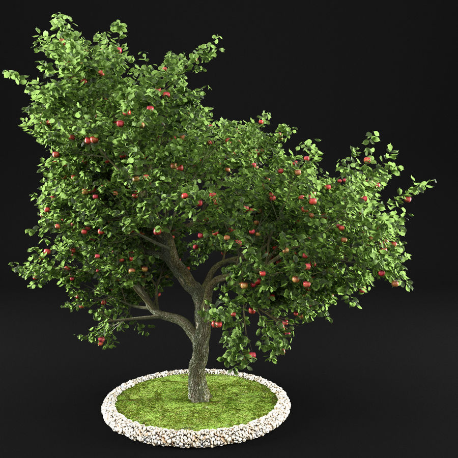 Elma Ağacı 5 royalty-free 3d model - Preview no. 2