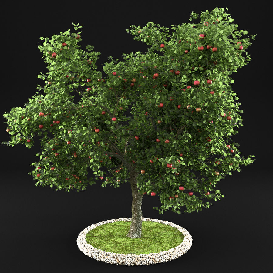 Elma Ağacı 5 royalty-free 3d model - Preview no. 7