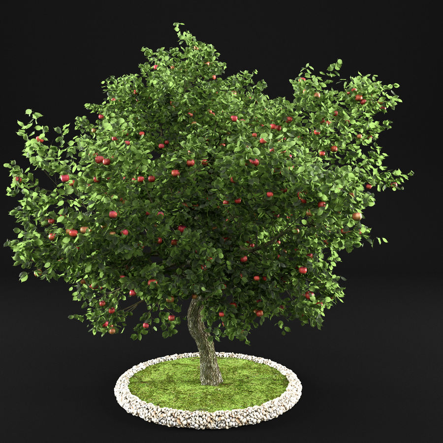 Elma Ağacı 5 royalty-free 3d model - Preview no. 4