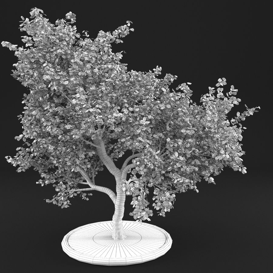 Elma Ağacı 5 royalty-free 3d model - Preview no. 10