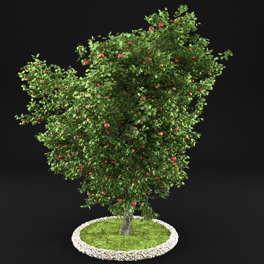 Elma Ağacı 5 royalty-free 3d model - Preview no. 8