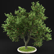 Apple Tree 7 3d model