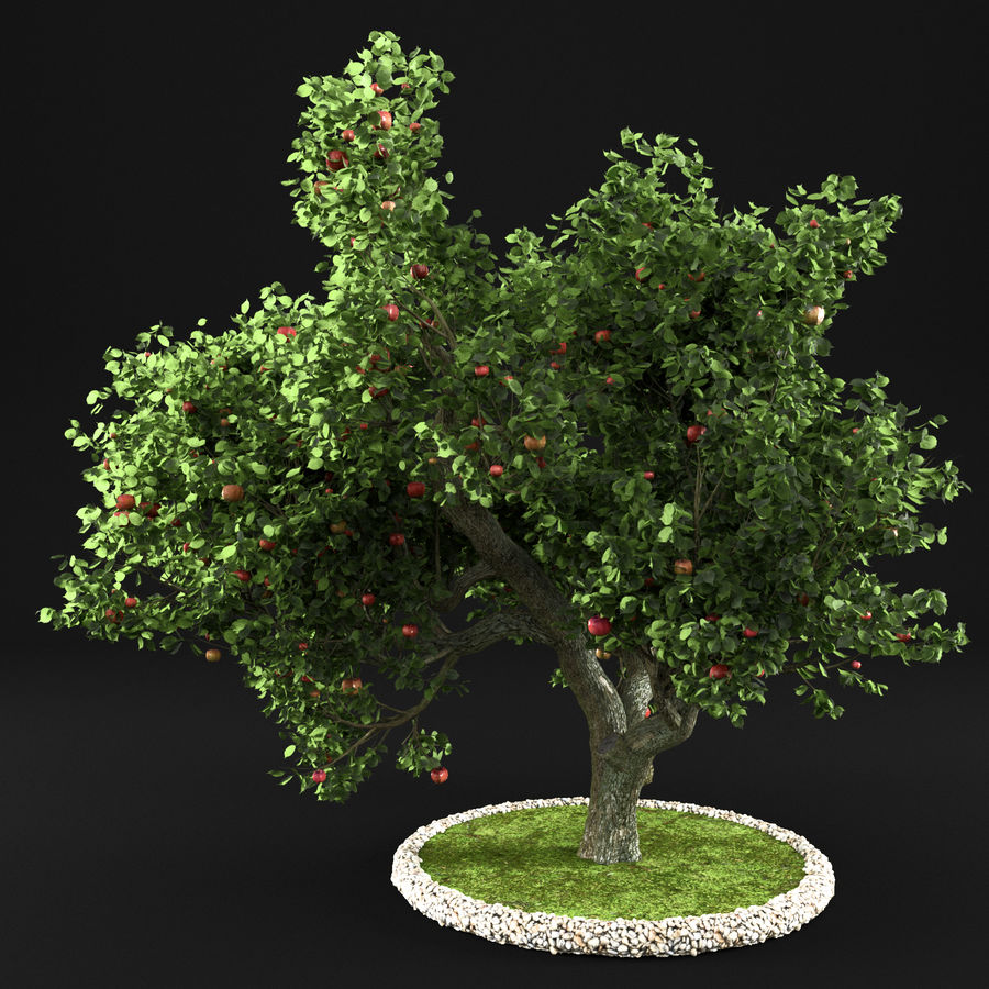 Яблоня 8 royalty-free 3d model - Preview no. 2