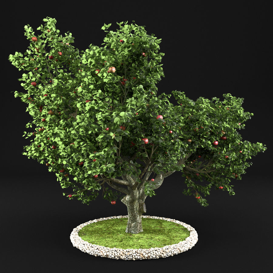 Яблоня 8 royalty-free 3d model - Preview no. 3