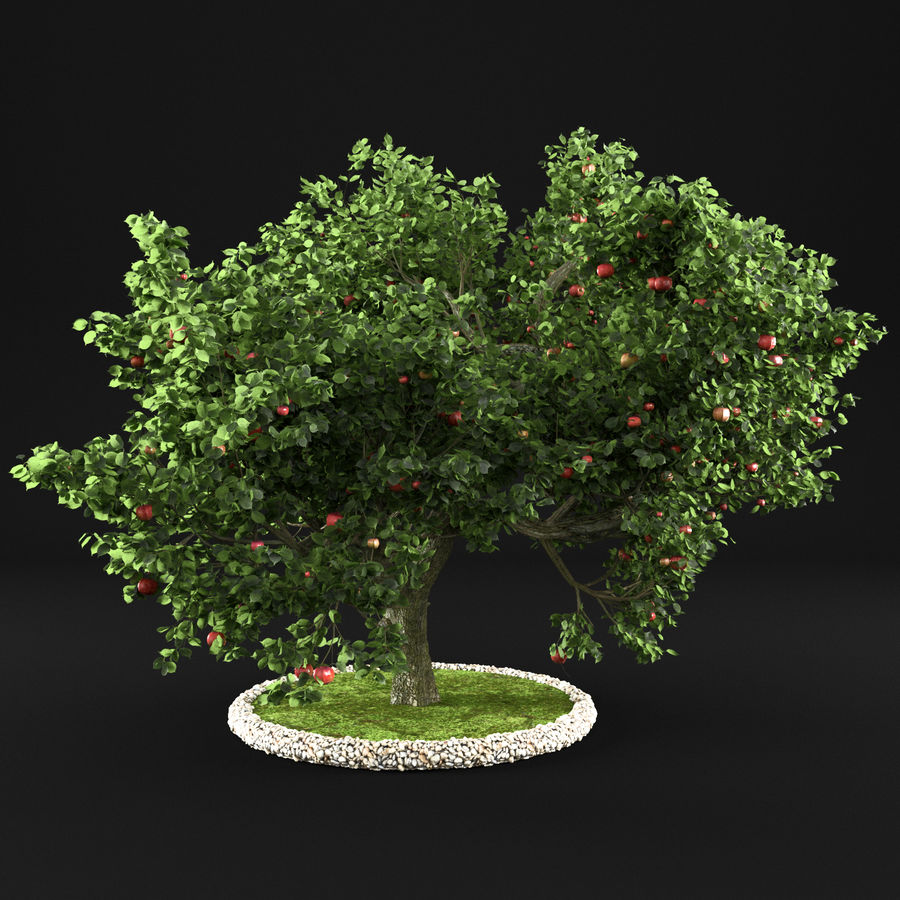 苹果树8 royalty-free 3d model - Preview no. 6