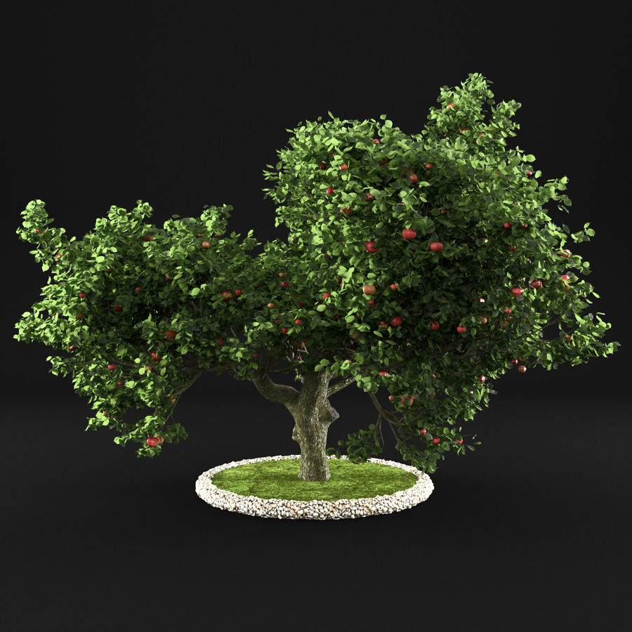 Яблоня 8 royalty-free 3d model - Preview no. 7
