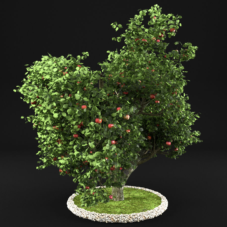 苹果树8 royalty-free 3d model - Preview no. 8