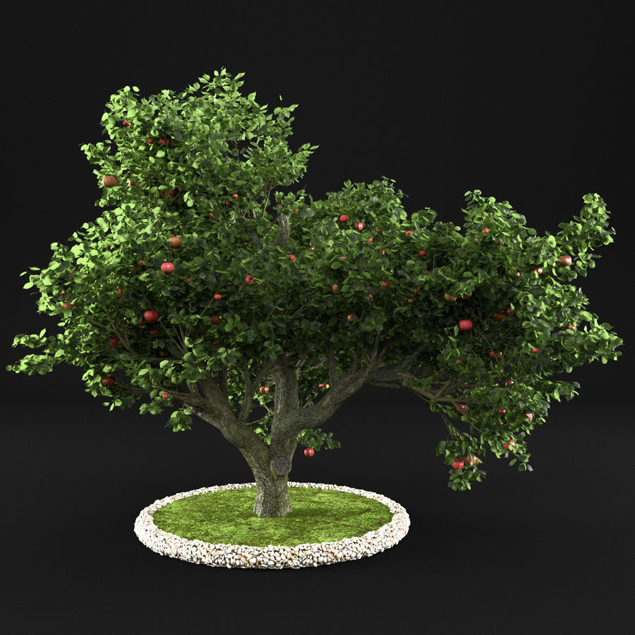 Яблоня 8 royalty-free 3d model - Preview no. 4