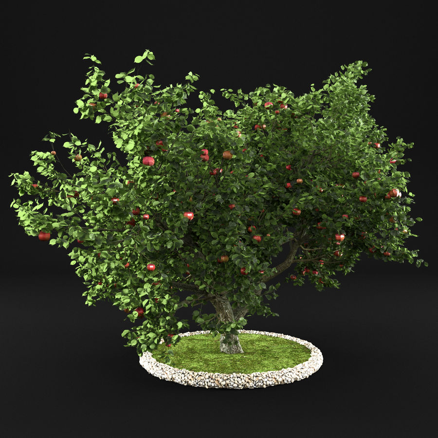 Apple Tree 10 royalty-free 3d model - Preview no. 8
