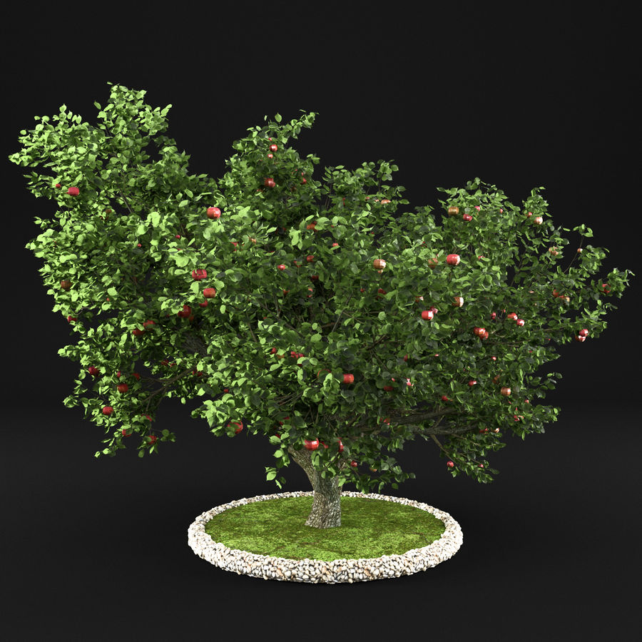 Apple Tree 10 royalty-free 3d model - Preview no. 5