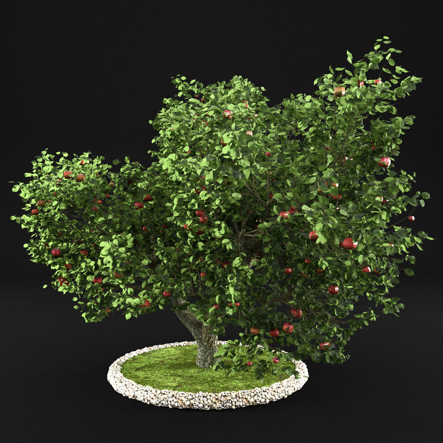 Apple Tree 10 royalty-free 3d model - Preview no. 7